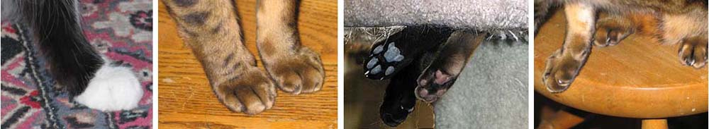 A composite of cat paws