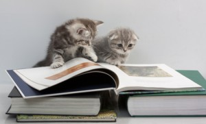 Scottish Fold cats are reading