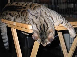 Cat Behavior Feeding Cats Asia