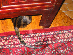 Make a note on the stickers of the cats hiding places