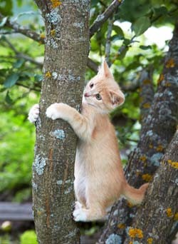 Cats have to back down trees.