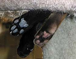 Cats sweat through their paws