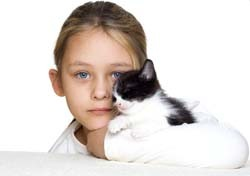 Cats show  affection by head bunting