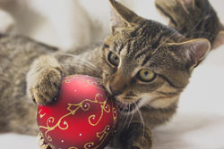 Cat playing with ornament. by Fotolia.
