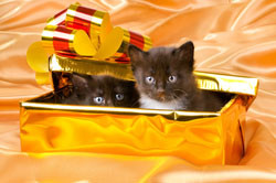 Think twice before giving cats as gifts.