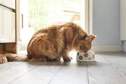 Cat eating from a bowl by Fotolia.
