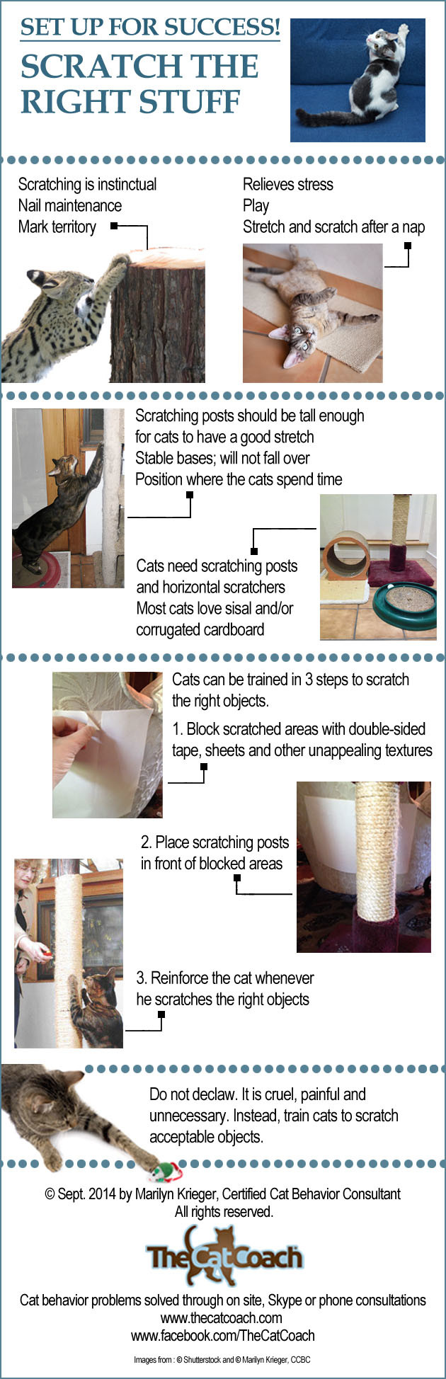 Cats can be trained to scratch the right furniture by Marilyn Krieger, CCBC