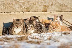 Help feral cats survive the winter by building them shelters