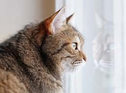 Cat looking out of a window.